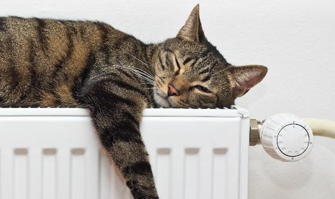 Un chat dort sur un chauffage