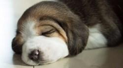 Un chiot dort devant un chauffage